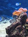 Colorful Beautiful Fish And Underwater Landscapes In The Sea