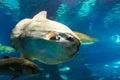 Underwater life barcelona fishes in l aquarium de or aquarium of spain Stock Images