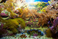 Underwater life. Coral reef, fish. Royalty Free Stock Photo