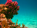 Underwater life of tropical sea Stock Photos