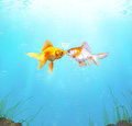 Underwater Love Royalty Free Stock Photo