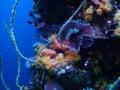 Underwater Marine Life Royalty Free Stock Image