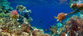 Underwater panorama in a coral reef with colorful sealife Royalty Free Stock Photo