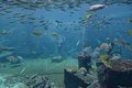 Underwater panorama with rocks coral reef and fishes Royalty Free Stock Photo