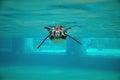 Underwater Penguin Royalty Free Stock Photo