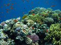 Underwater photo - coral reef with shoal of fishes Stock Image