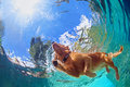 Underwater photo of dog swimming in outdoor pool Royalty Free Stock Photo