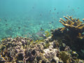 Underwater photo hard coral reef red sea Royalty Free Stock Photos