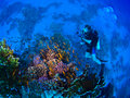 Underwater photographer at coral reef Royalty Free Stock Image
