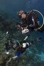 Underwater photographers Royalty Free Stock Photo