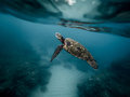 Underwater Photography of Brown and Black Turtle