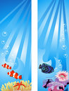 Underwater Scene Royalty Free Stock Image