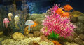 Underwater scene, coral reef, colorful fish  and jelly in  ocean Royalty Free Stock Photo