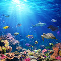 Underwater Scene With Coral Reef Royalty Free Stock Photo