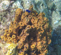 Underwater scene fish sea sponges was taken off island dominica Stock Image