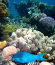 Underwater Scene of Great Barrier Reef