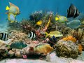 Underwater scenery with colorful sea life Stock Image