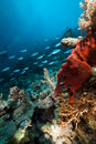Underwater scenery in the Red Sea. Stock Images