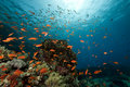 Underwater scenery at Yolanda reef Royalty Free Stock Images
