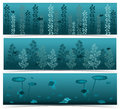 Underwater scenes set of three nature themed banners with abstract life freshwater algae fishes and shells on dark background Stock Photography