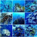 Underwater sea collage with corals and fishes Stock Photography