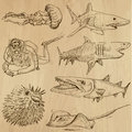 Underwater sea life vector set no hand drawn collection of an illustrations description each drawing comprise of two basic layers Stock Image