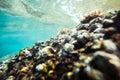 Underwater sea rocks bottom background Stock Images