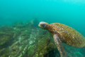 Underwater Sea Turtle Royalty Free Stock Photo