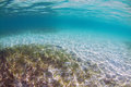 Underwater seagrass a bed of photographed Royalty Free Stock Photo