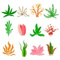 Underwater seaweed vector set on white background. Sea plants and aquatic marine algae. Collection of types aquarium