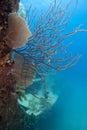 Underwater ship wreck