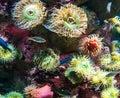 Underwater shoot of vivid bottom ocean creatures Royalty Free Stock Photo