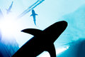 Underwater with silhouette of shark Royalty Free Stock Photo