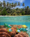 Underwater surface view tropical beach colorful coral reef fish Royalty Free Stock Photo