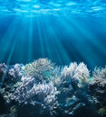 Underwater tranquil scene with copy space Royalty Free Stock Photos