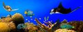 Underwater tropical reef panorama Royalty Free Stock Photo