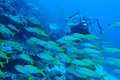 Underwater videographer Royalty Free Stock Photo