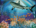 Underwater wallpaper with shark vector illustration Royalty Free Stock Photography
