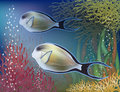 Underwater wallpaper with surgeon-fish Royalty Free Stock Photo