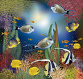 Underwater wallpaper with tropical fish Royalty Free Stock Photo