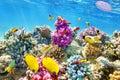 Coral y