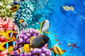 Underwater World With Corals A...