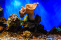 A vivid and lush coral reef in ocean, marine sea life, aquatic plants flora. Royalty Free Stock Photo