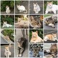 Undomesticated cat in urban city Stock Photo