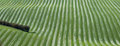 Undulating striped grass field taken from above Royalty Free Stock Photo