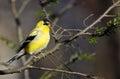 Une modification au plumage d'élevage Images libres de droits