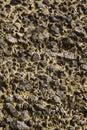 Ungefärlig jordning Royaltyfria Bilder