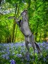 Unicorn in fantasy forest