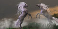 Unicorn stallions fighting lost in mountain foggy mist two bucks fight for dominance Stock Image