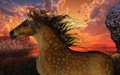 Unicorn sunset a beautiful dappled buckskin prances with its wild mane flowing and muscles shining Royalty Free Stock Images